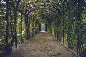 Walkway with arched green